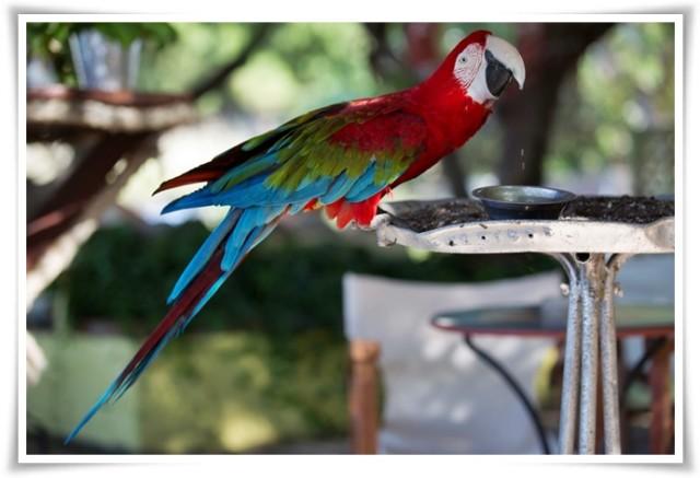 skala-skiminia-parrot
